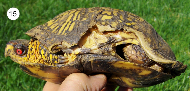 Pin Housing For Your Box Turtle on Pinterest